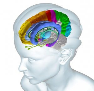 Zones of brain